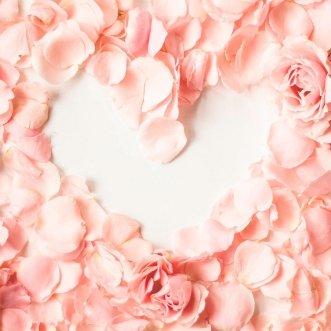 Кремовые лепестки роз