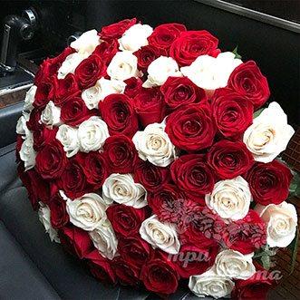 101 красная и белая роза 70 см.